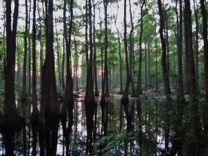 Bear Creek Swamp in Prattville, Alabama