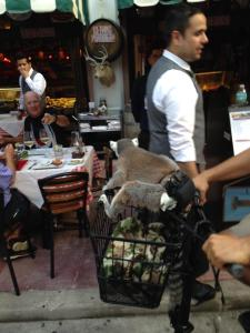 lemur in a diaper on a bike, just your normal day.