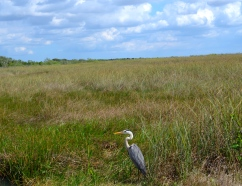Nature in The Florida Everglades National Park A U.N.E.S.C.O Heritage Site