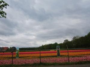 Europe Holland 382