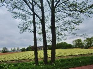 Europe Holland 386