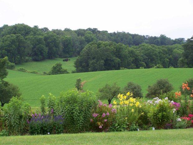 flwflowerhill.jpg