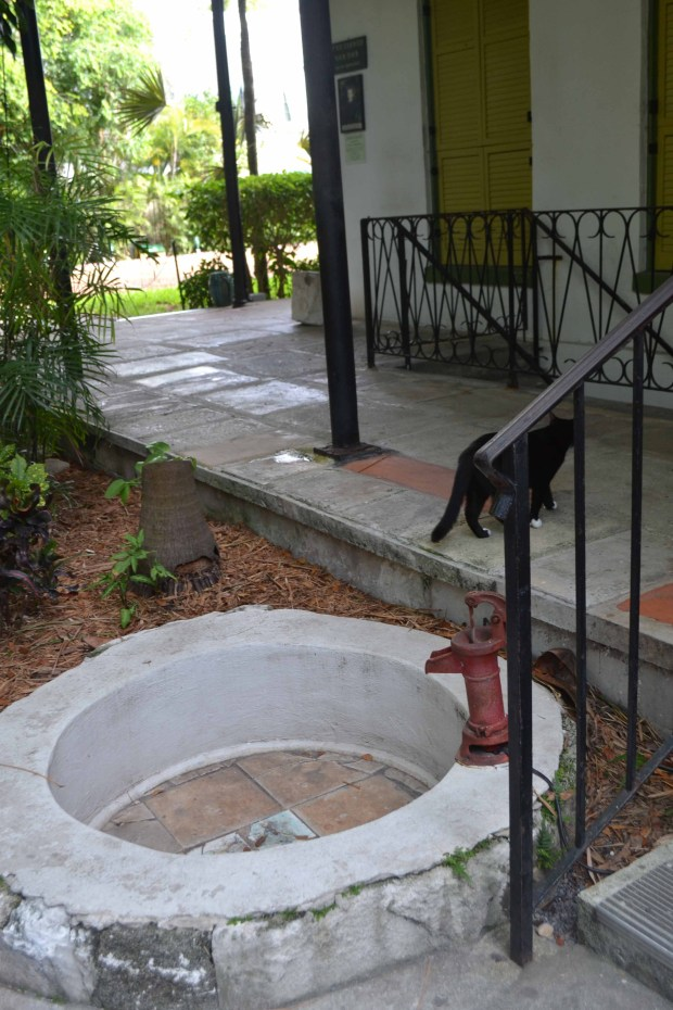 hemingwayblackcat