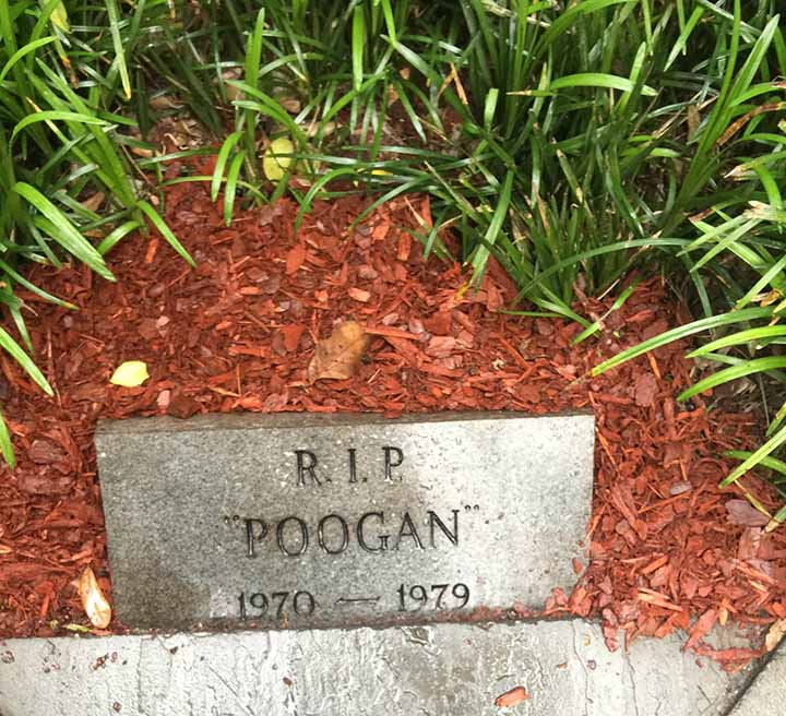 poogangrave