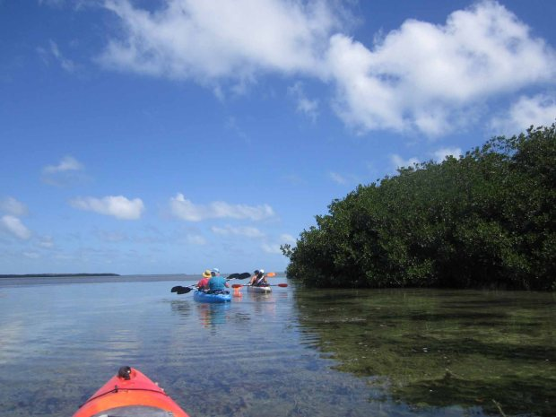 mangrovekayak2