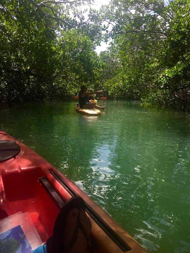 mangroveyak