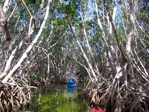 In Mangrove